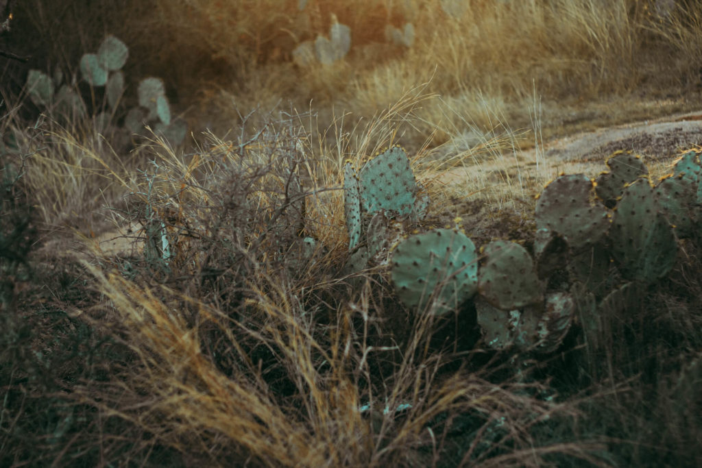 Enchanted Rock Texas Photoshoot Cacti