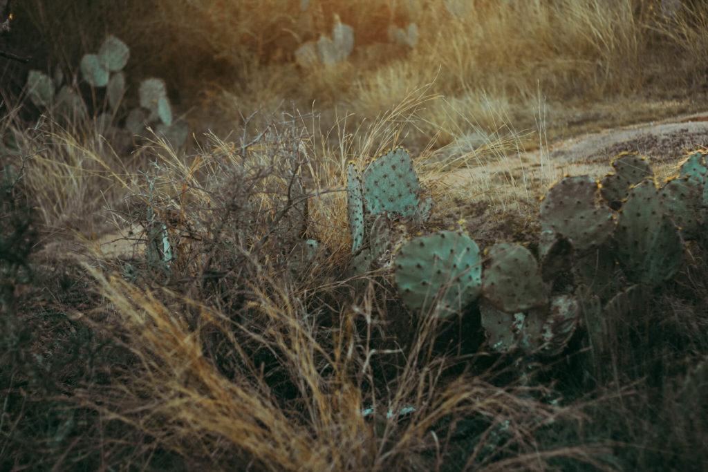 Enchanted Rock Texas Photoshoot Cacti